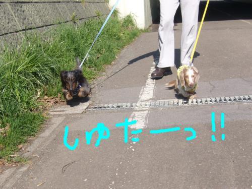snap_chapuco_201155131043.jpg