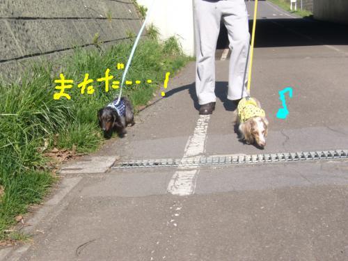 snap_chapuco_20115513611.jpg