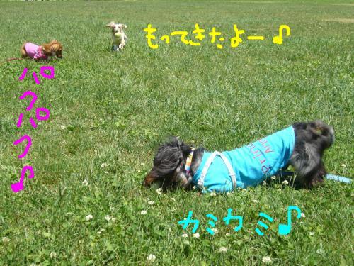 snap_chapuco_20116113191.jpg