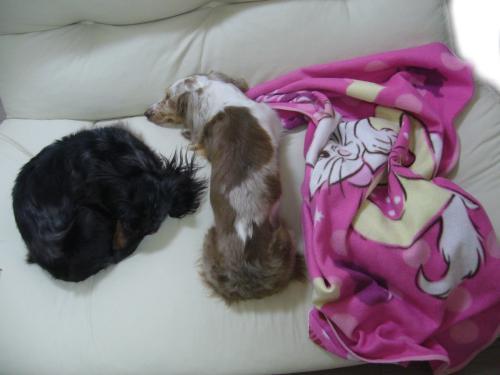 snap_chapuco_2011631906.jpg