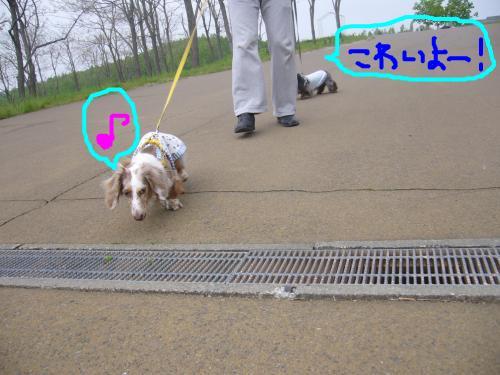 snap_chapuco_201164182131.jpg