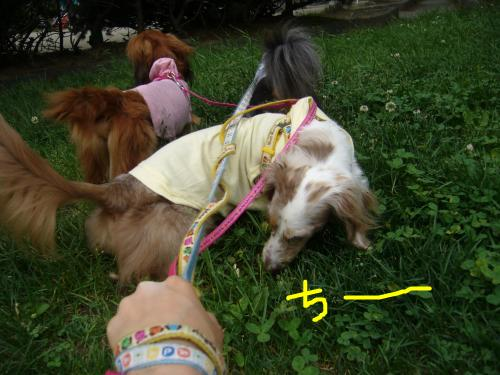 snap_chapuco_20116420957.jpg