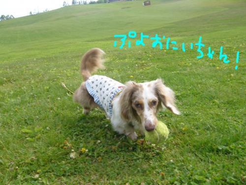 snap_chapuco_201165213041.jpg