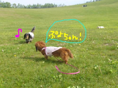 snap_chapuco_20116521529.jpg