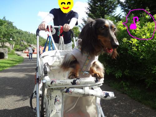 snap_chapuco_20117019715.jpg