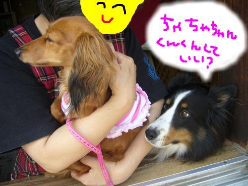 snap_chapuco_20117115913.jpg