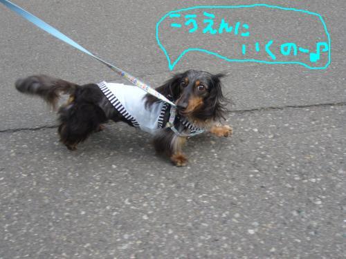 snap_chapuco_20117410329.jpg
