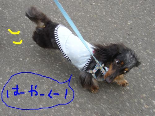 snap_chapuco_201174103455.jpg