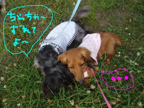 snap_chapuco_201174104338.jpg