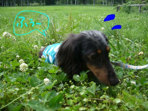 snap_chapuco_201174155626.jpg