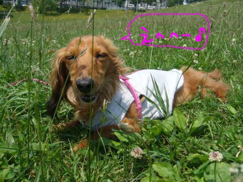 snap_chapuco_201175223427.jpg