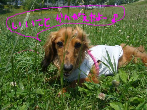 snap_chapuco_201175223736.jpg