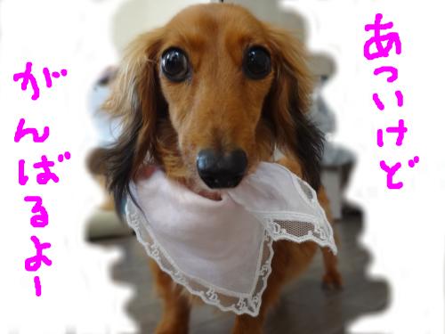 snap_chapuco_20118420631.jpg