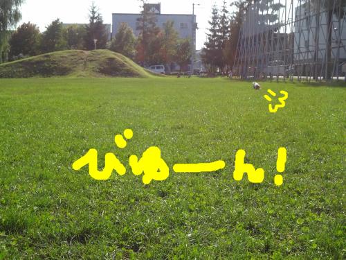 snap_chapuco_201195185649.jpg