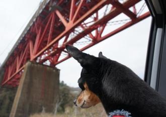 鉄橋だ~鉄橋だ~♪って歌知ってる私^^;