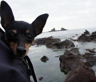真鶴岬、朝は寒かった~