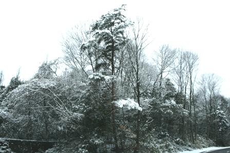 20110125 雪 (2)