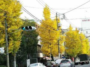 09-11-28 銀杏