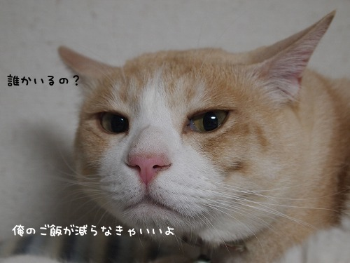 P6111156.jpg