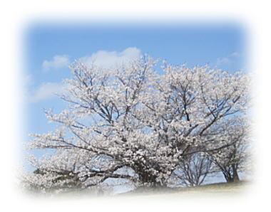 大高緑地桜