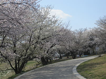 大高緑地公園桜