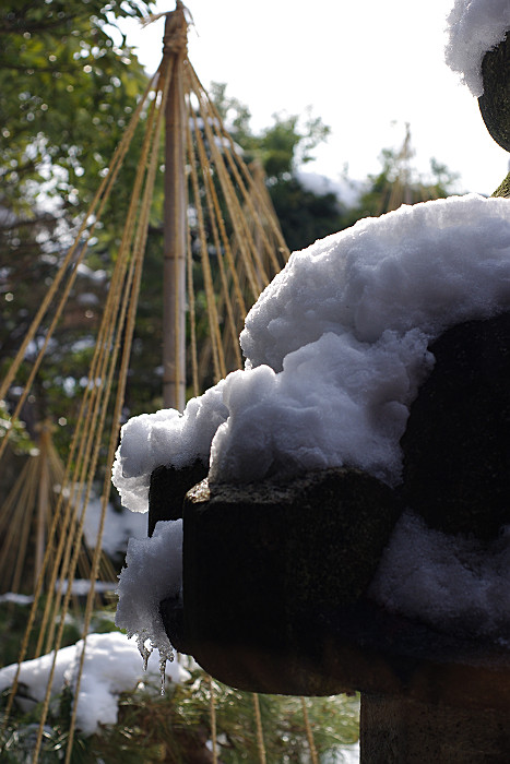 灯ろうと雪吊り