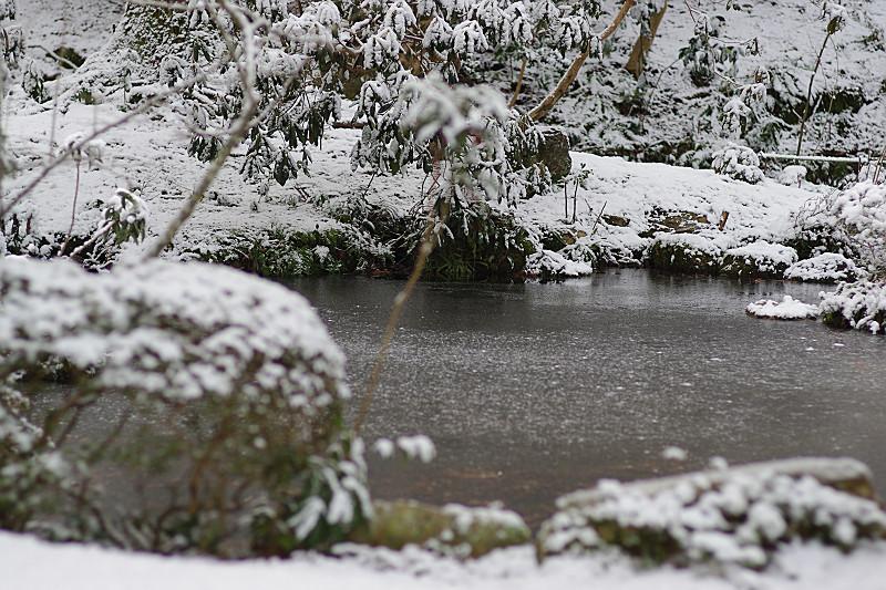 水面の粉雪