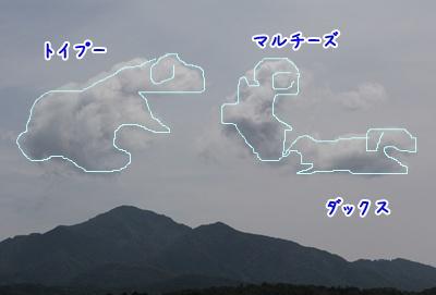 1106157.jpg