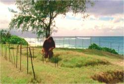 現代の島にいるハーリー。ある仲間の墓に花を手向けている。