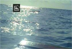 船の残骸が浮かんでいる海