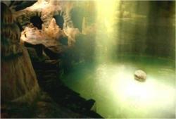 デズモンドが見ている光の泉