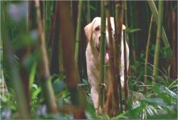 シーズン1より、謎の犬・ビンセントか?