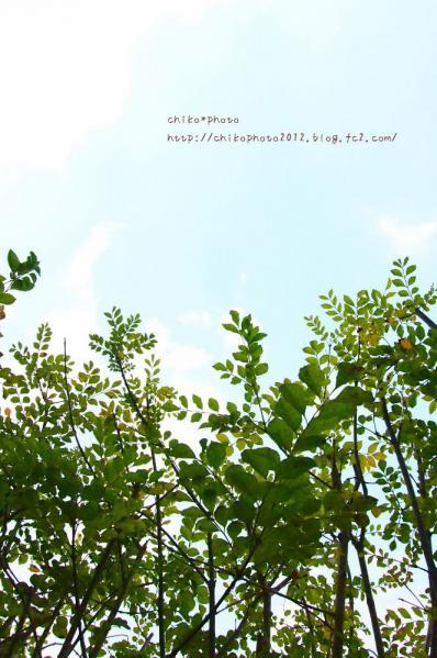photo-303 3月の空と葉