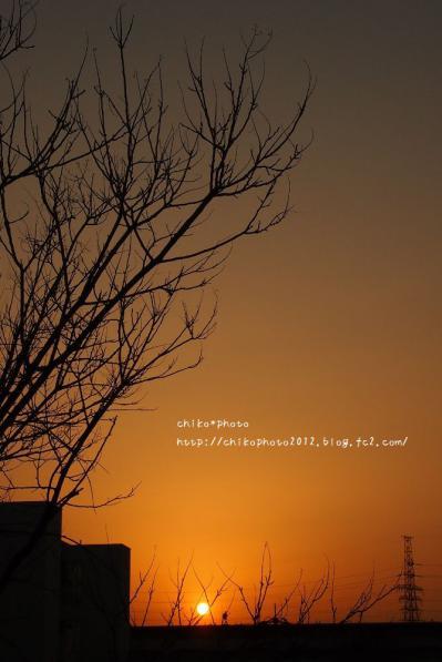 photo-304 3月の夕日と木