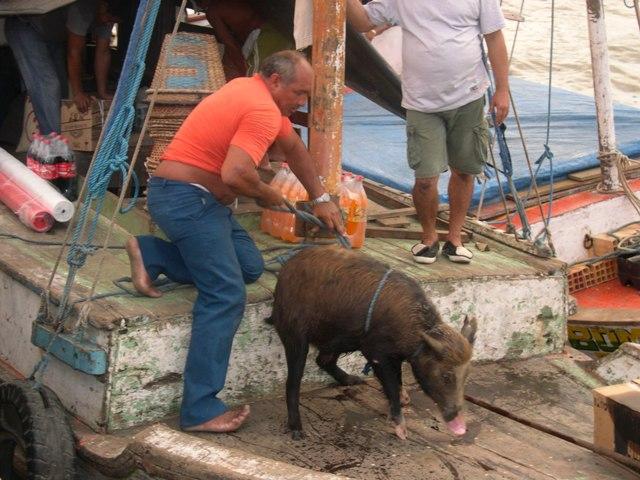 ベレンの市場に出荷された野猪