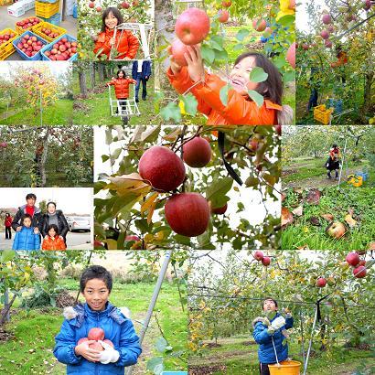 りんご狩り(09年)