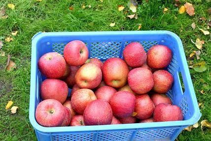 飯田のりんご