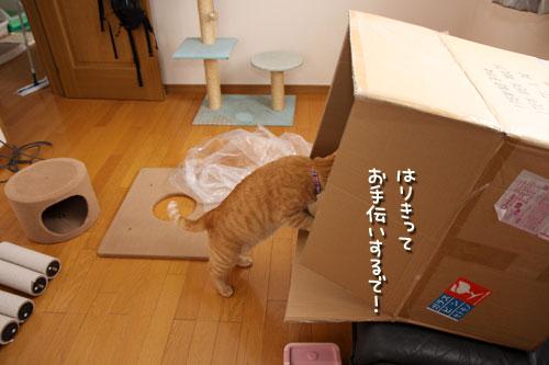 ええ箱や~