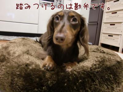 b_AifRkx.jpg