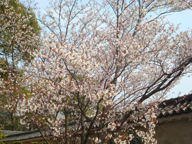 05姫路城09