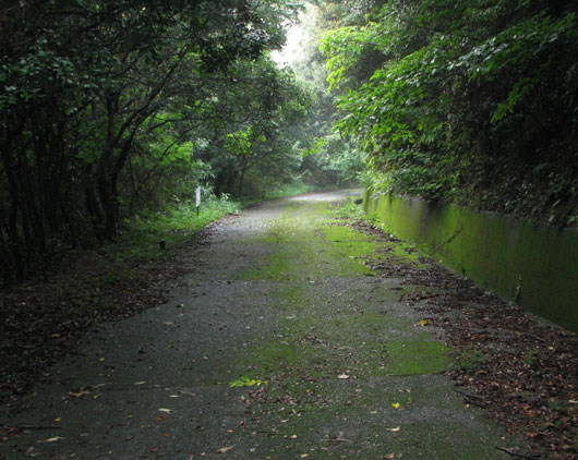 苔むす坂道