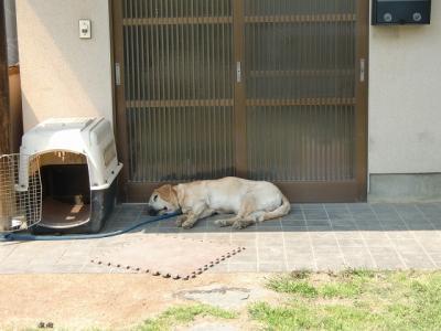 我が家の愛犬ジョーダン