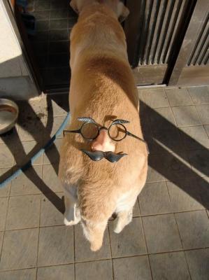 愛犬ジョーダン