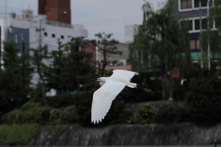 kamogawa8.jpg