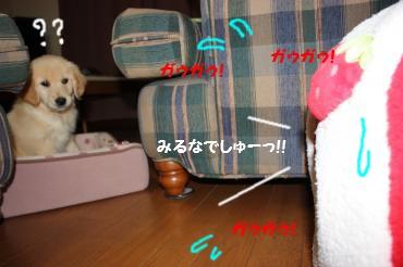 IMG_7198_convert_20100216220418.jpg