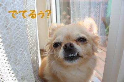 IMG_7357_convert_20100227211256.jpg