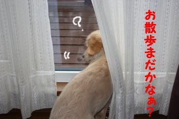 IMG_8072_convert_20100413215252.jpg