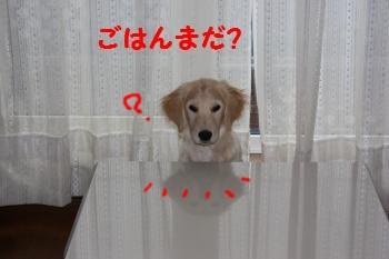 IMG_8074_convert_20100413215013.jpg