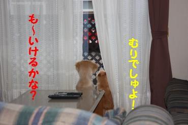 IMG_8110_convert_20100415210407.jpg