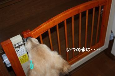 IMG_8268_convert_20100428220252.jpg